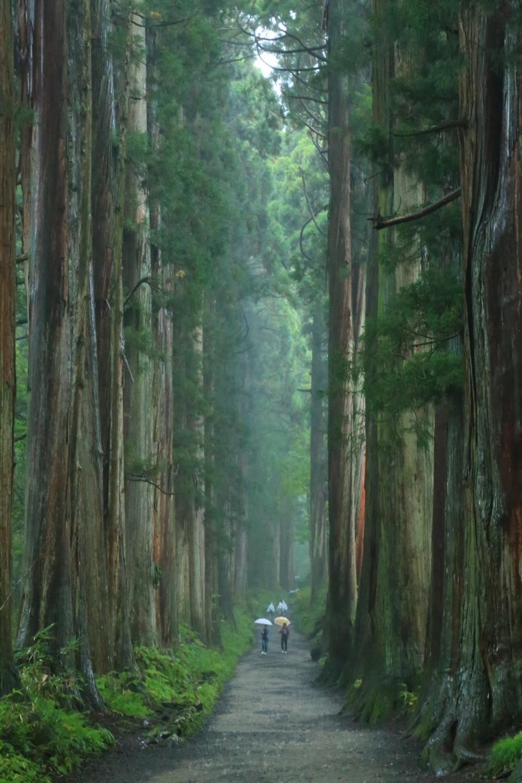 樹齢400年の杉並木、戸隠神社奥社参道|わくわく絶景写真旅(わくたび)